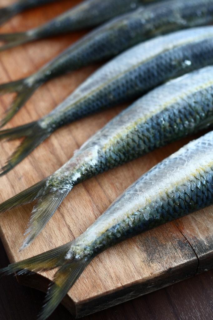 sardine_crude
